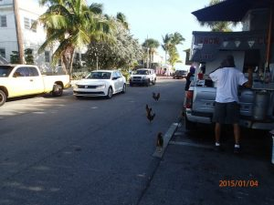 rv-camping-key-west-chickens